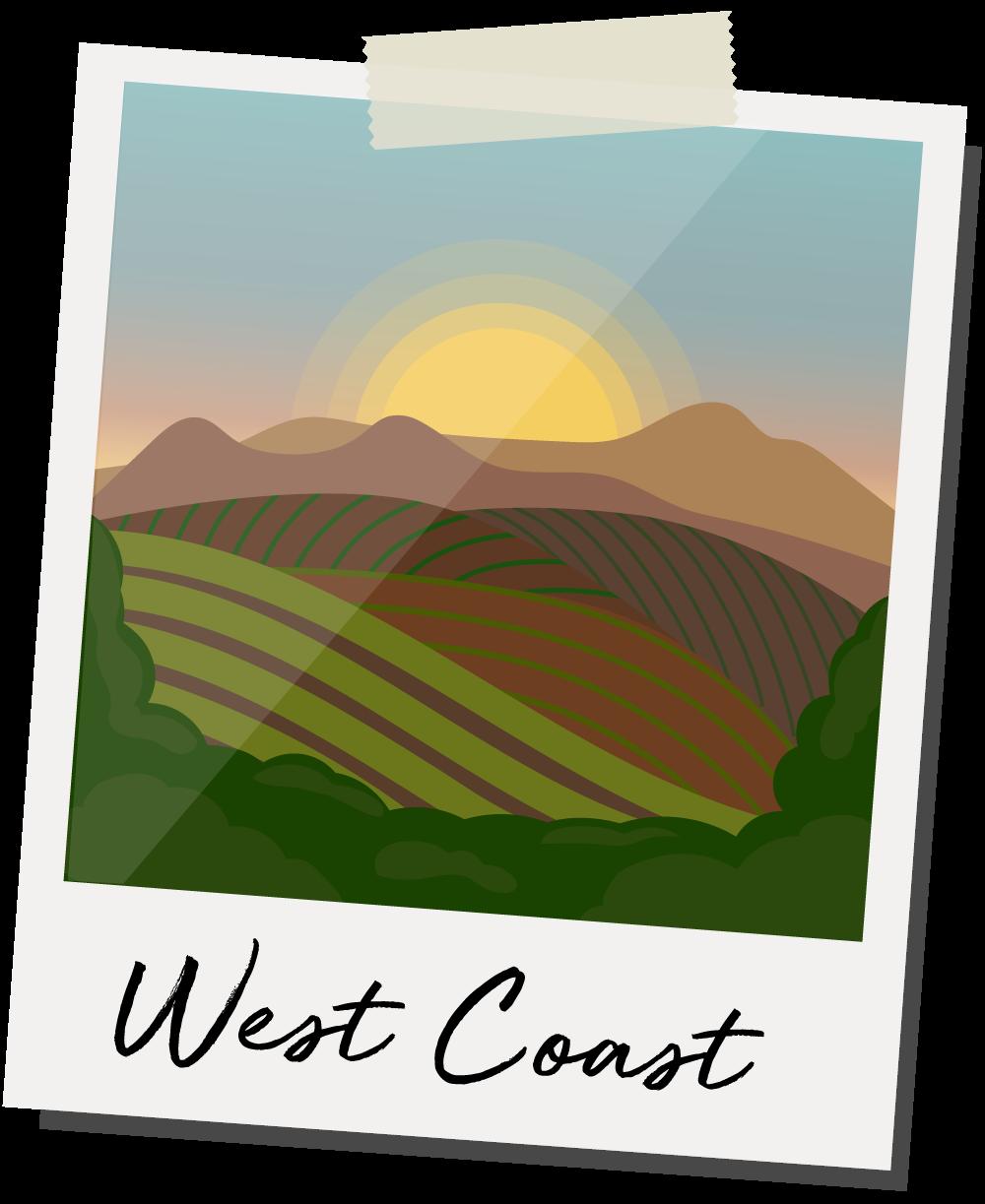 West Coast illustration of vineyard with sunrise.